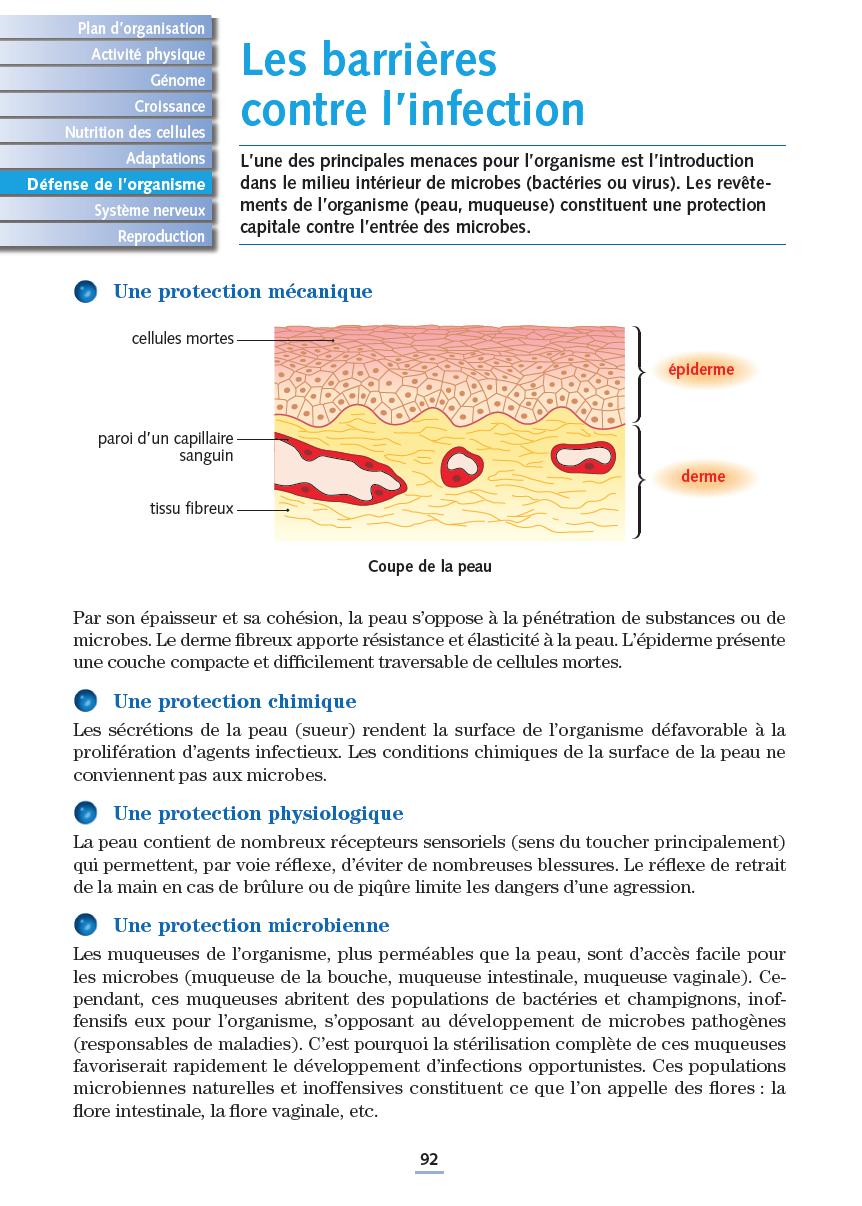 cellules du corps humain